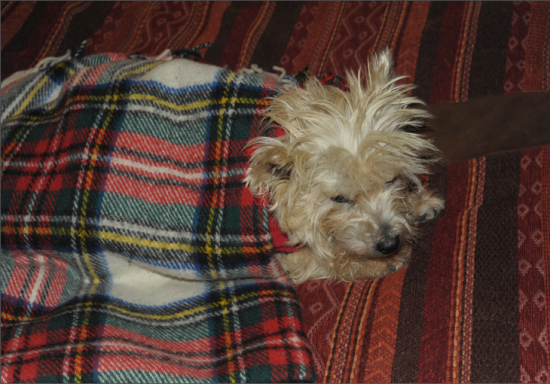 Divinity's kept warm with Bronte Tweed blanket