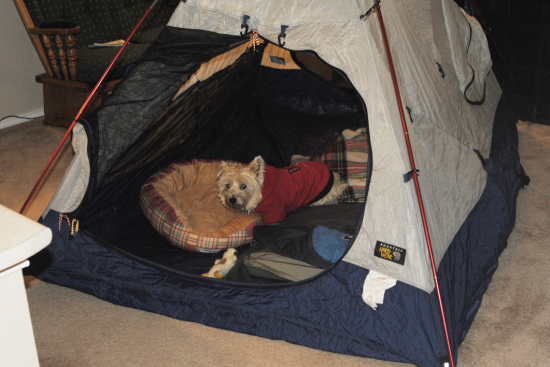 Mid-Winter Indoor Camping trip