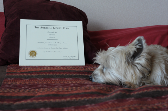 Divinity with her Canine Good Citizen Certificate