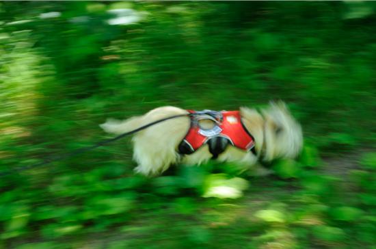 Chasing her prey