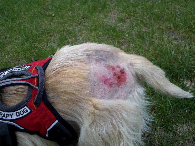 Can I Give My Dog Hydroxyzine