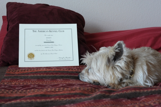 Canine Good Citizen certificate