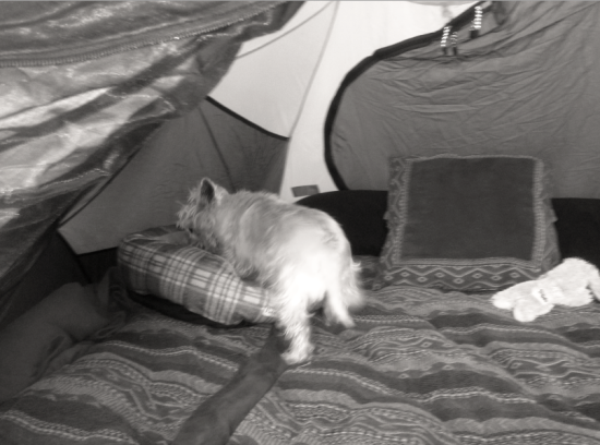 Divinity climbing into her bed in the tent