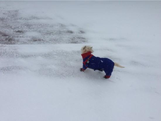 Snow Storm - April 18, 2013