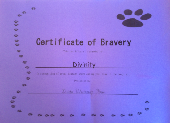 Certificate of Bravery