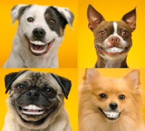 Doggy Dentures