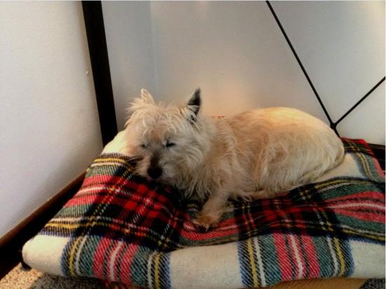 Bronte Tweed blanket