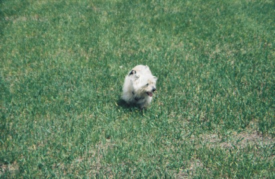 Miss Divinity walking on soft grass