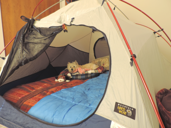 The 5th Mid-Winter Indoor Camping Trip