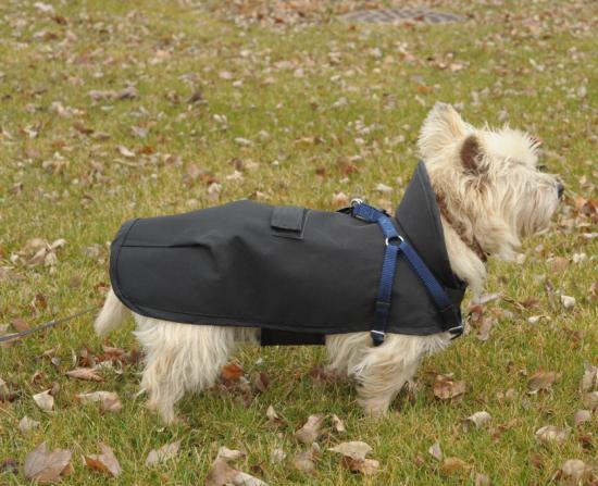 Raincoat from Foggy Mountain Dog Coats
