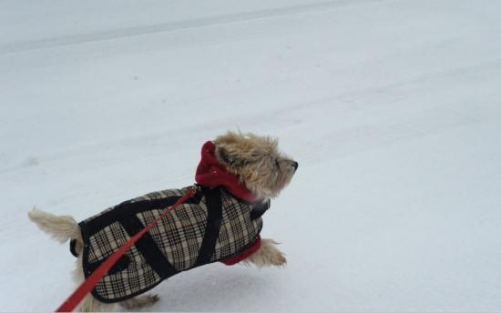 Mini-Horse blanket from Foggy Mountain Dog Coats