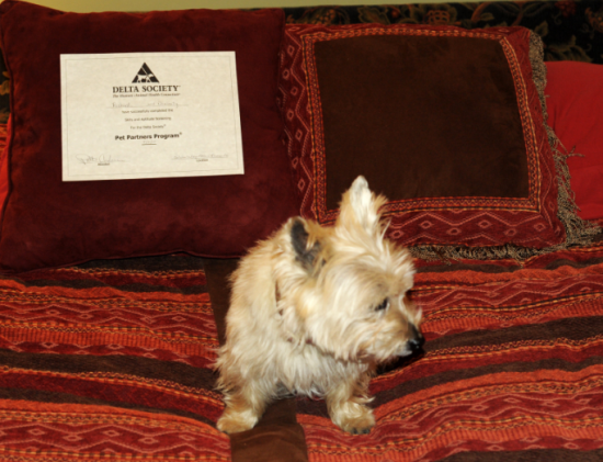 Divinity with her Therapy Dog certificate
