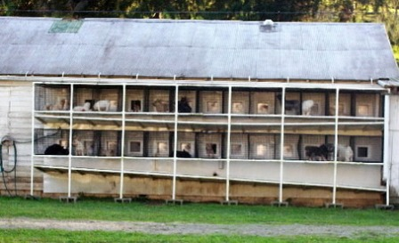 Missouri Puppy Mill Auction Block