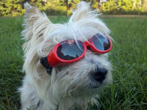 Divinity wearing her Doggles