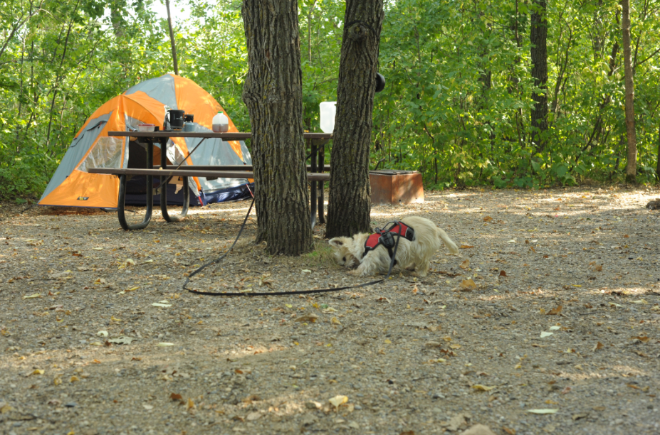 Camping London Ontario >> doggy camping « Divinity
