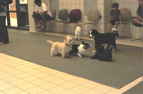 Divinity & her pals at Puppy Playtime. Divinity was seven years older than the next oldest dog in this group