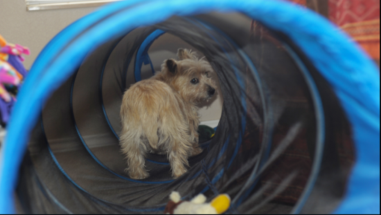 Divinity in her Agility Tunnel