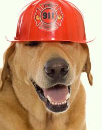 Fire-Dog