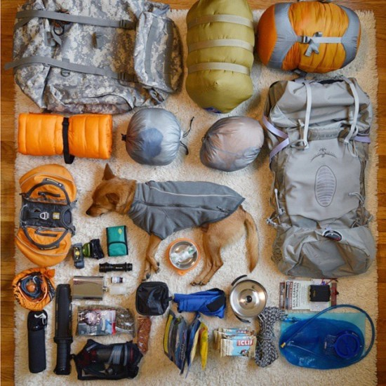 Camping Essentials (Look Closely!)