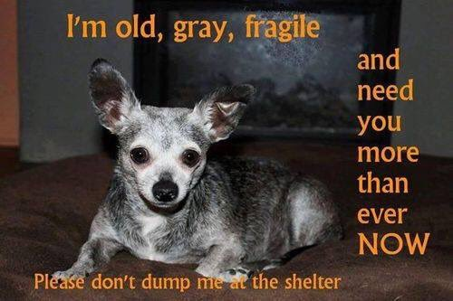I'm Old, Grey, and Fragile