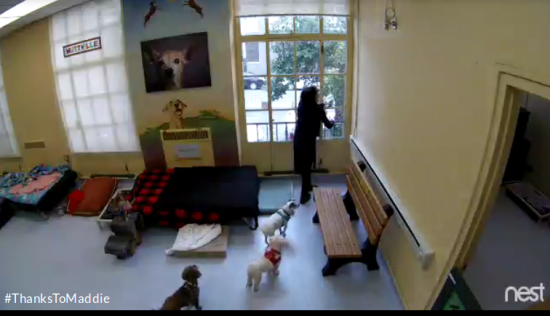 Screenshot of the MaddieCam at the Muttville Senior Dog Rescue