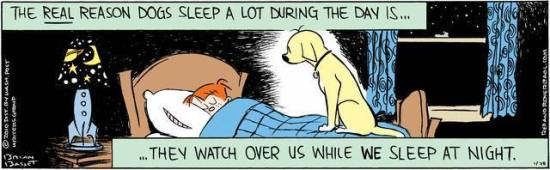 The Real Reason Dogs Sleep During the Day