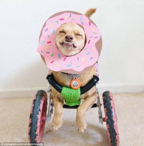 Daisy in her wheelchair