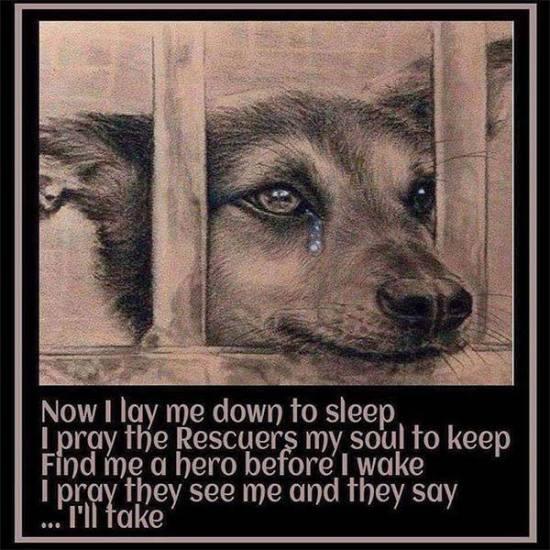 Shelter Dogs Prayer
