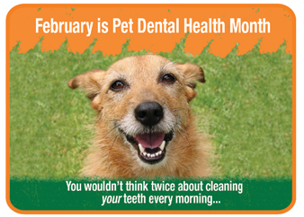 It's Pet Dental Health Month