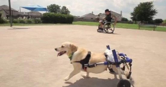 Chance zooming around in his wheelchair