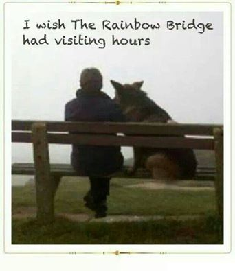 Visiting hours at the Rainbow Bridge