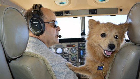 A dog enjoying their Freedom Flight