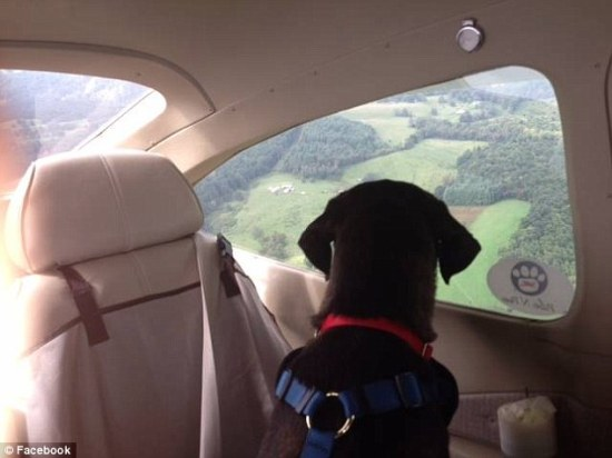 The best view for a PnP's rescued dog