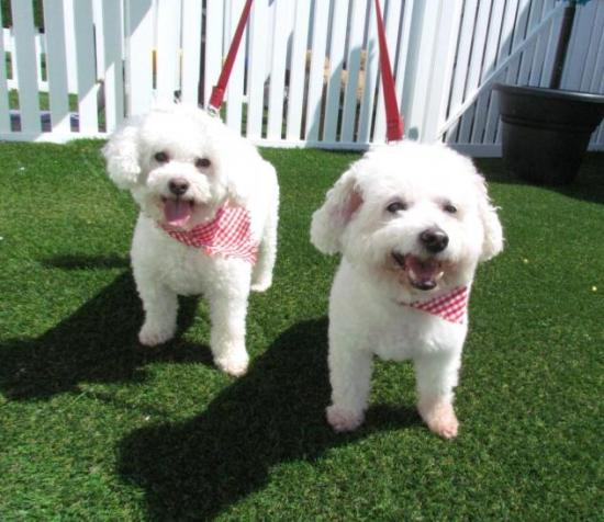 Georgie & Frederick