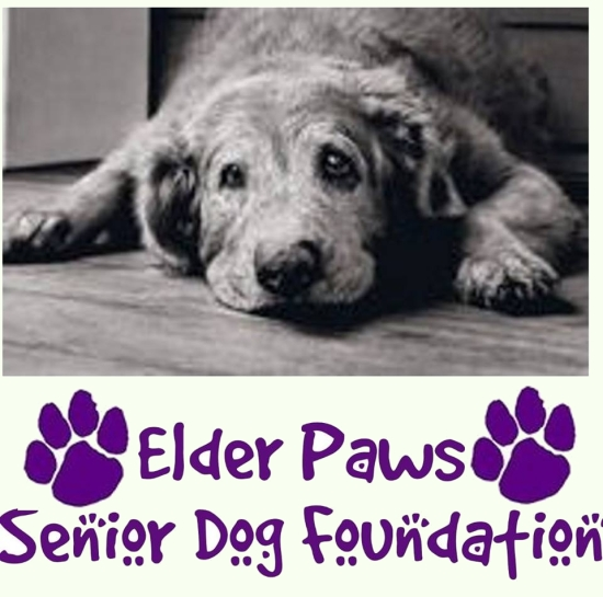 Elder Paws Senior Dog Foundation