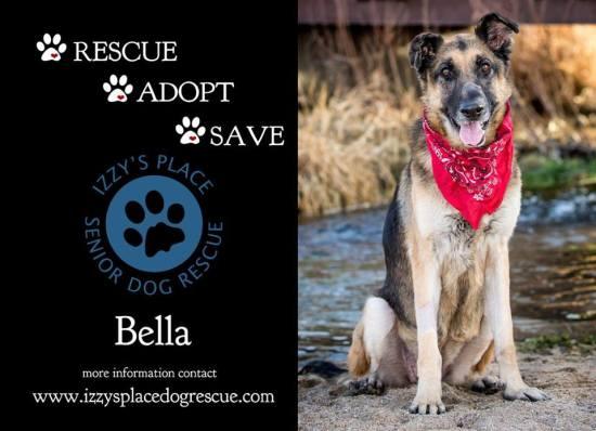 Izzy's Place Senior Dog Rescue