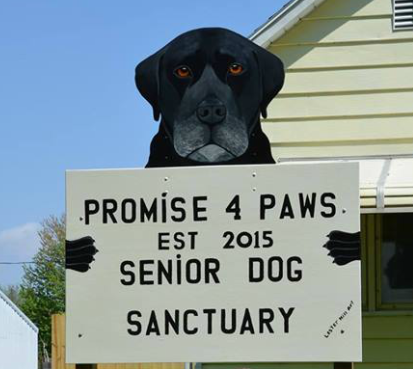 Promise 4 Paws