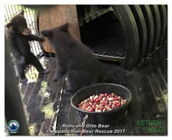 Rollo Bear & Otto Bear