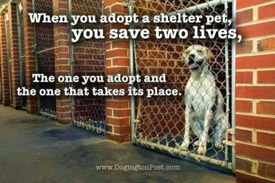 When you adopt a shelter pet