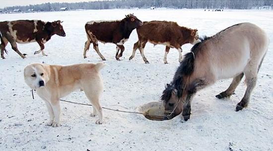 Umka the dog and Kunduchene the horse