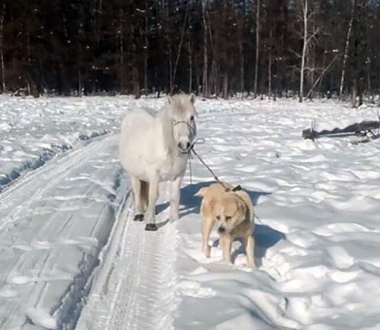 Umka the dog walks another horse