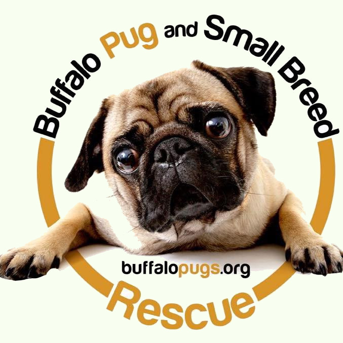 buffalo pug and small breed rescue facebook divinity 5217