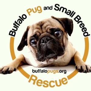 Buffalo Pug & Small Breed Rescue - Logo