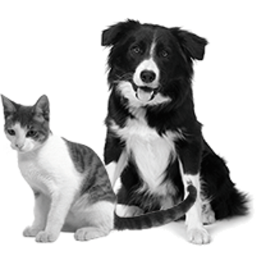 Chiens and Chats