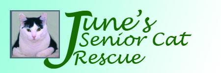 June's Senior Cat Rescue