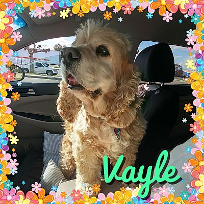 Vayle