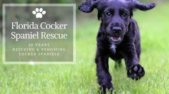 Florida Cocker Spaniel Rescue - logo
