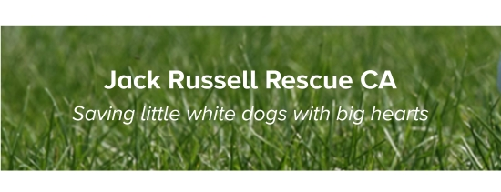 Jack Russell Rescue - Header
