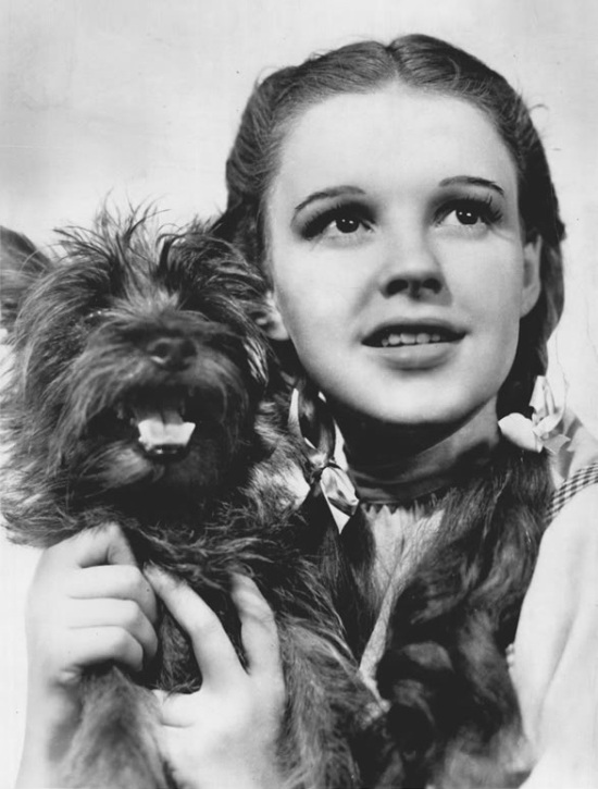 Judy Garland and Terry (1939)