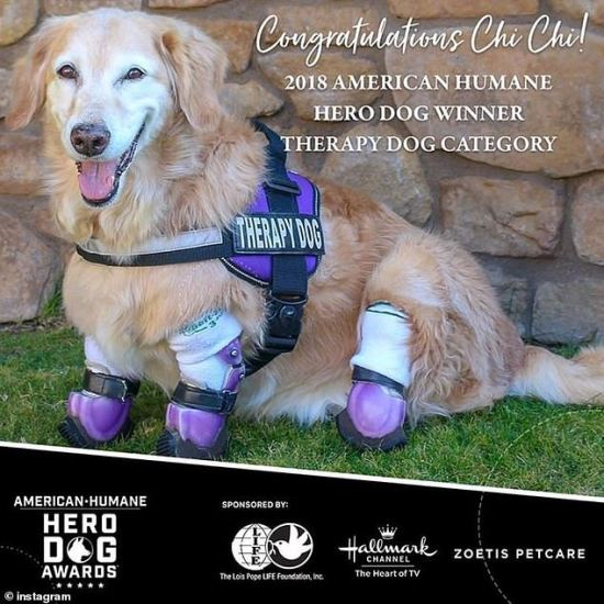 American Humane's 2018 Hero Dog award in the Therapy Dog category